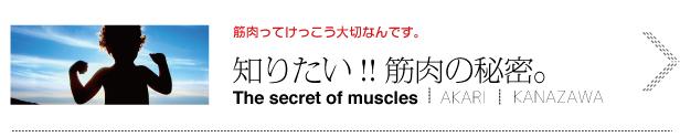 筋肉のヒミツ