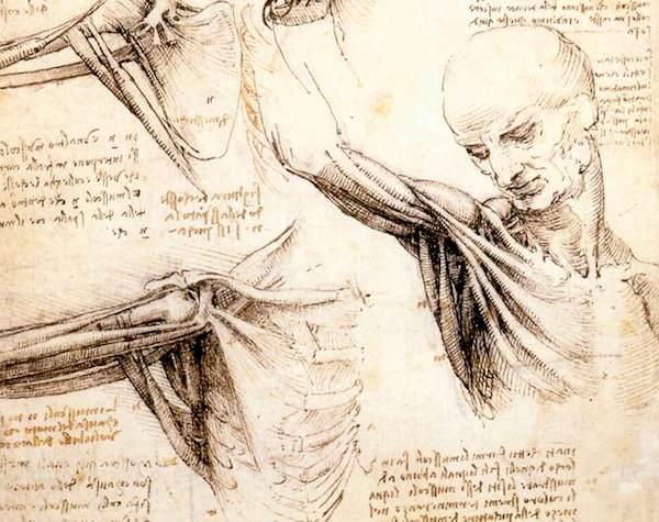 五十肩四十肩の痛みの原因は肩甲骨!!ココが治療や予防ポイント。