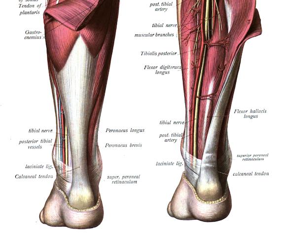 アキレス腱 痛みの原因と治療法。周囲炎はランナーに多い腱炎症