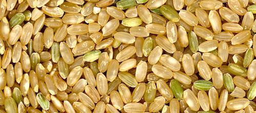 成長ホルモン玄米