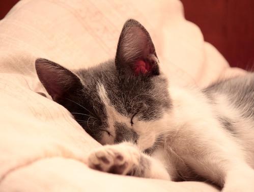 睡眠で疲れが取れる理由。なぜ眠りは疲労回復の特効薬?